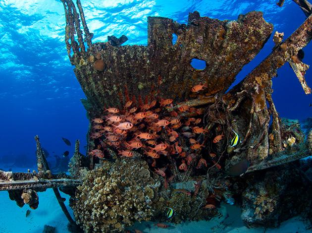 【馬里亞納塞班島】Saipan自由潛水40米能見度拍美照|自由行6日(不含機票) 5