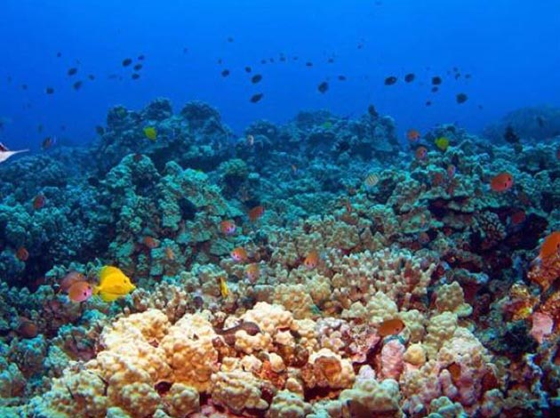 印尼-藍夢島 4