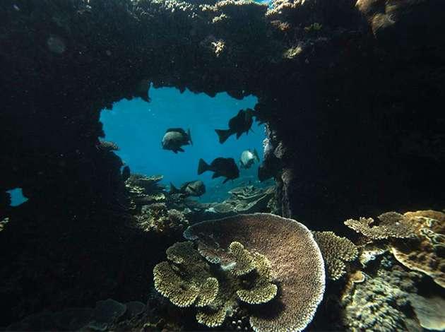 澳洲-伊莉特夫人島 4