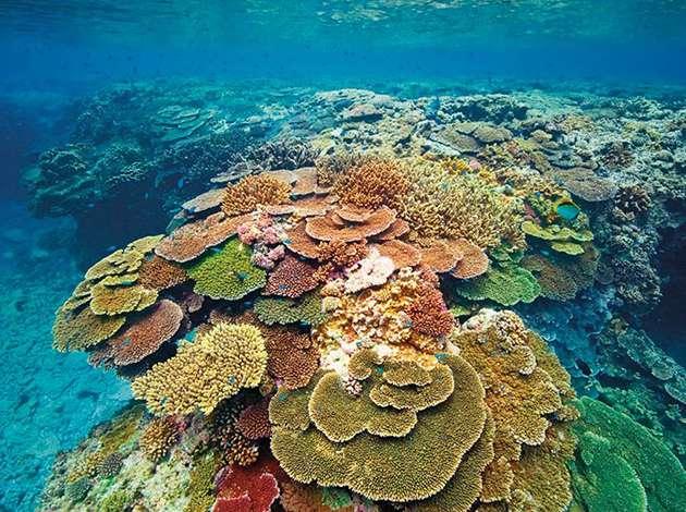 澳洲-伊莉特夫人島 1